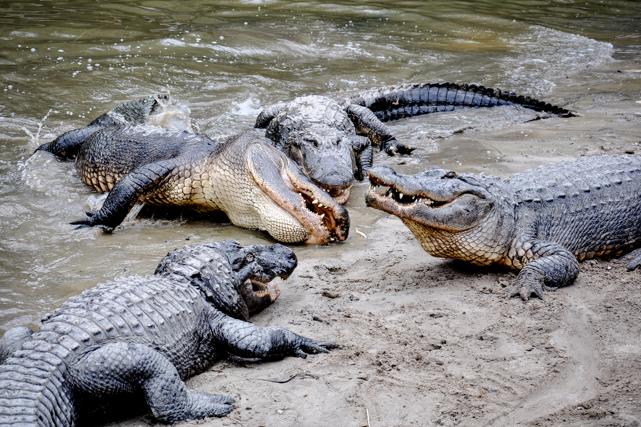 Vegetarian crocodile ancestors give researchers a surprise ...